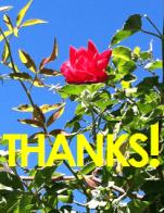 thanks w rose