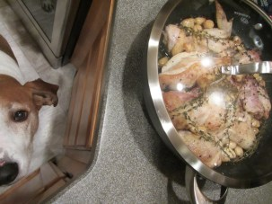 Chicken after 1 1/2 hours in the oven. Oh, and a begging, pleading hound.
