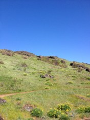 A mountain biker's happy place. Plus plenty of birds of prey! Can you see the Red Tailed Hawk?