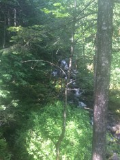 Rodney Falls through the trees