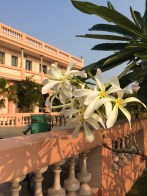 Seeking the sun. Pondicherry, India