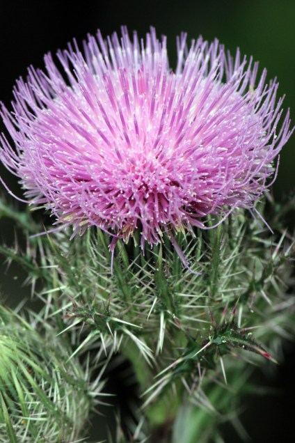 OWP flower IMG_6322
