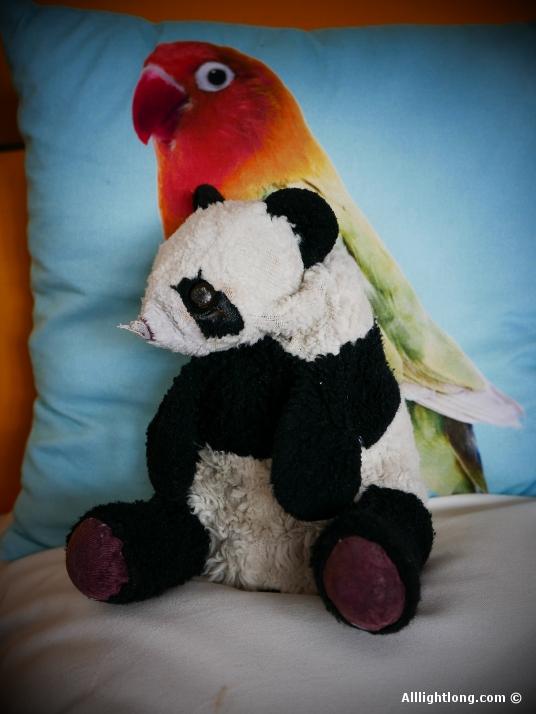 Le plus vieux panda du monde