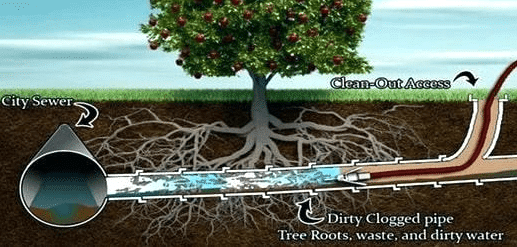 can-tree-roots-cause-sewer-drain-problems-arlington-texas