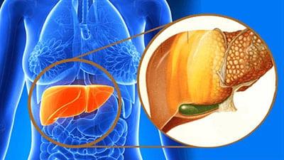 الفطر الريشي يعمل على إزالة السموم من الكبد وحمايته