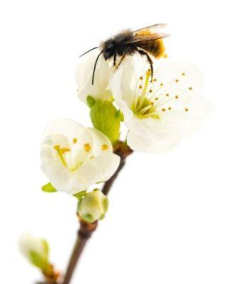 النحلة وهي تحط على الزهرة أثناء رحلة بحثها عن الرحيق داخل الأزهار