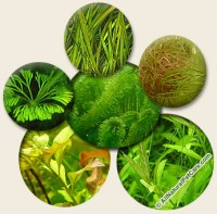 6 Fast-Growing Plants for Natural Cleaning in Standard ...