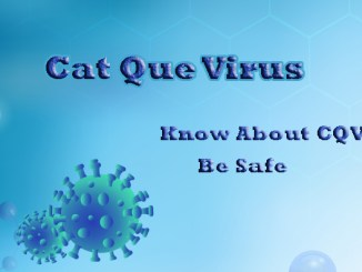 cat que virus