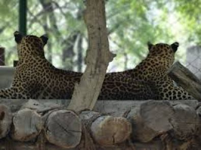 Top 10 Largest Zoos In India