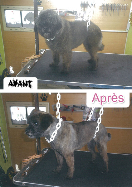 toilette_redon_chiens_chats_3
