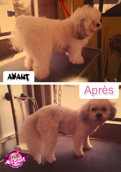 toilettage-chiens-chats-redon-3