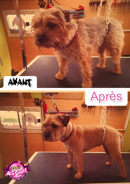 toilettage-chiens-chats-redon-4