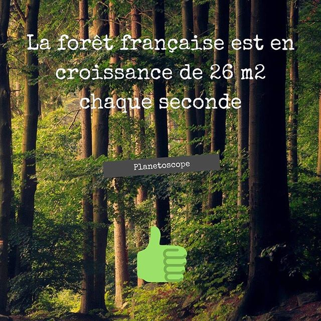 bio, bouillote, ecologie, environnement, shampoing solide