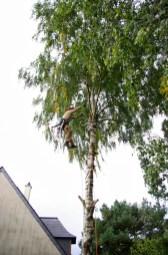 Déplacement dans l'arbre