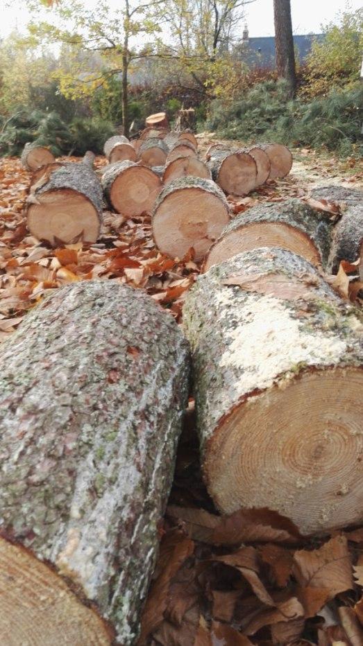 Stérage des troncs (Angers)
