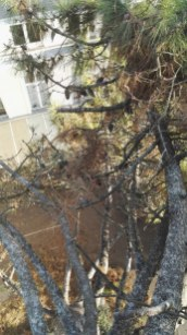 Branches mortes en trop grand nombre