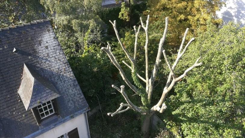 abattage nacelle angers arbre