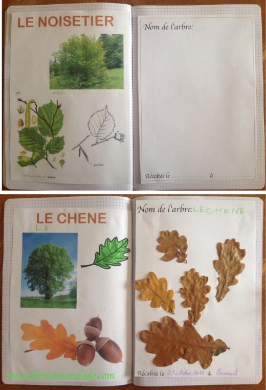 fiches arbres feuilles enfant diy