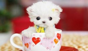 bébé chien tasse