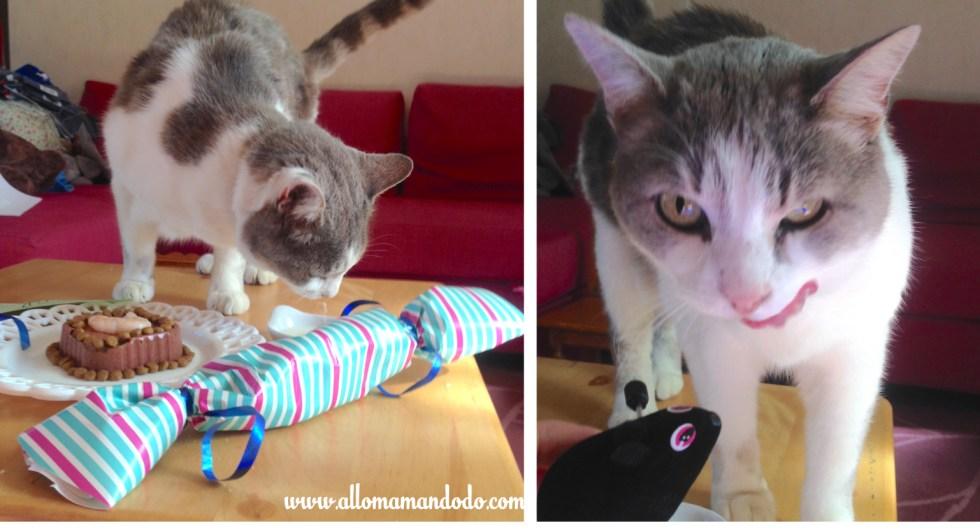 gateau d'anniversaire pour chat