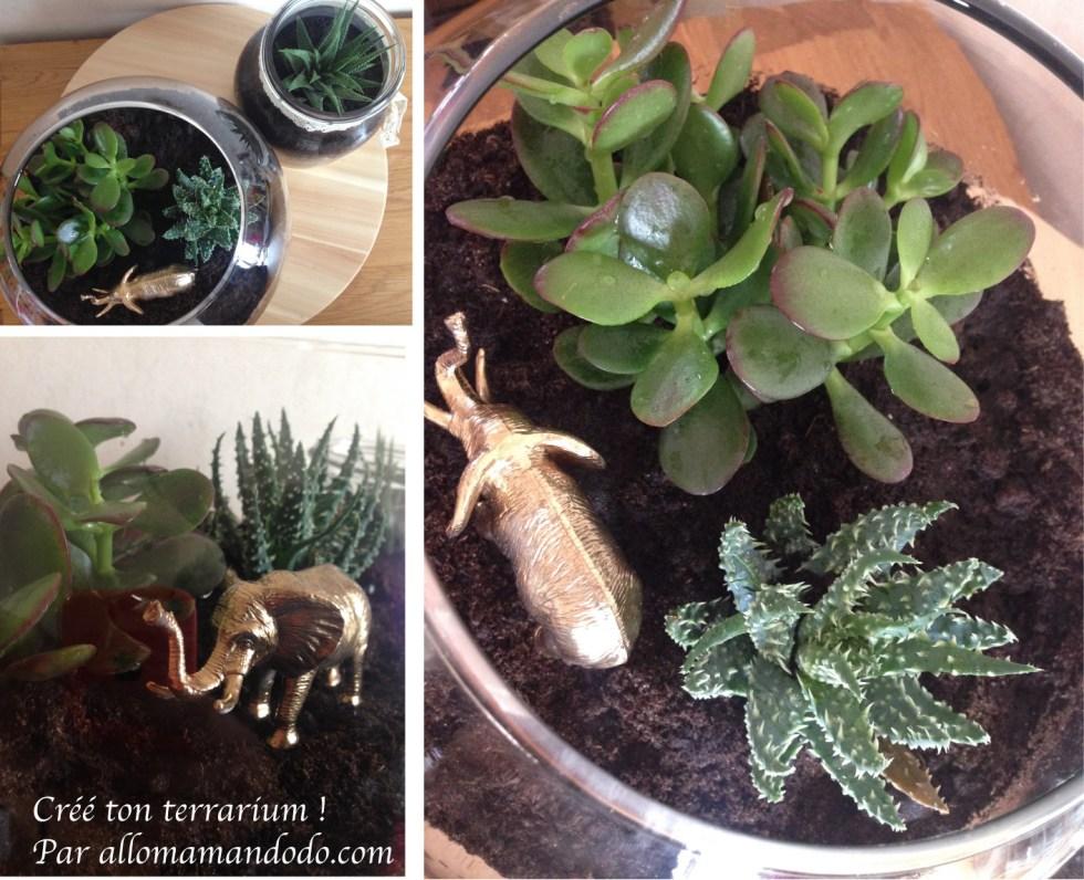 terrarium interieur tuto