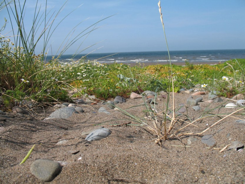 Allonby Sand Dunes