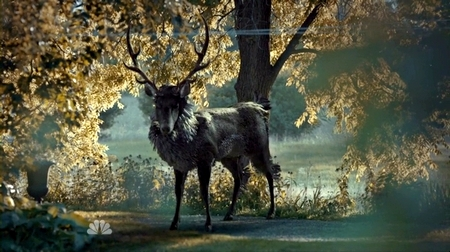 Hannibal_Stag