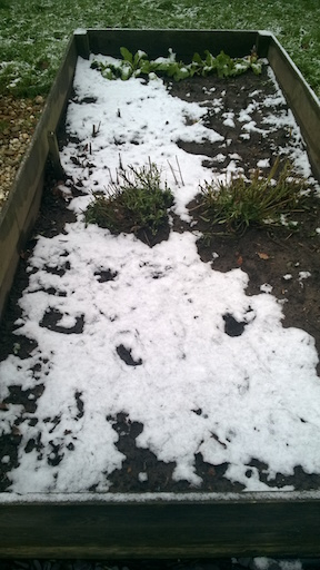 Snowy beds 1