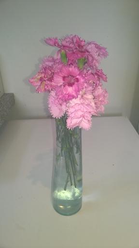 Vase Dianthus