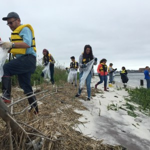 Some of the brave volunteers from our Marsh/Bay clean up. In a short time, we pulled about 20 full size garbage bags of mostly plastic and styrofoam debris off of about 500 feet of marsh.