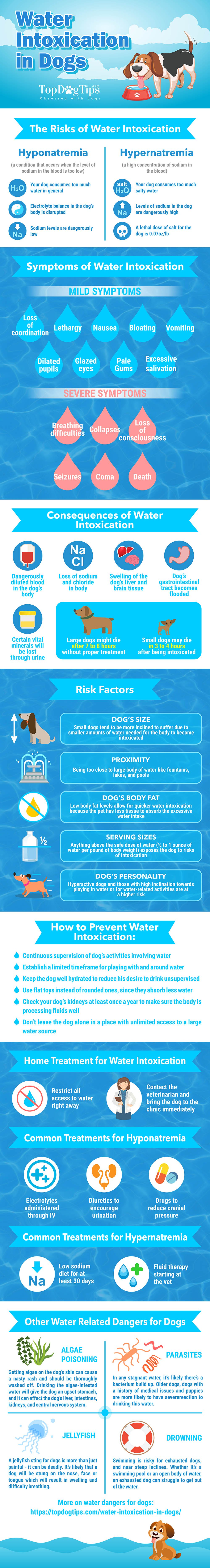 Water Intoxication in Dog, What is It and How to Handle It - All Our Paws