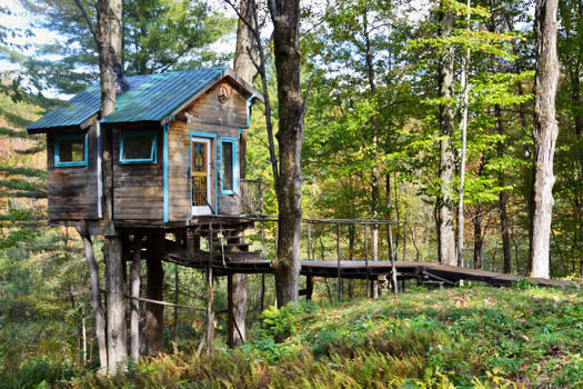 Weekend in a tree house  All Over Albany