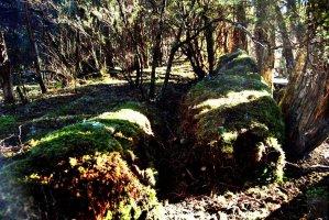 Goblin Forest Walk Blue Tier.004 11h09m55s2019 06 07 JPG
