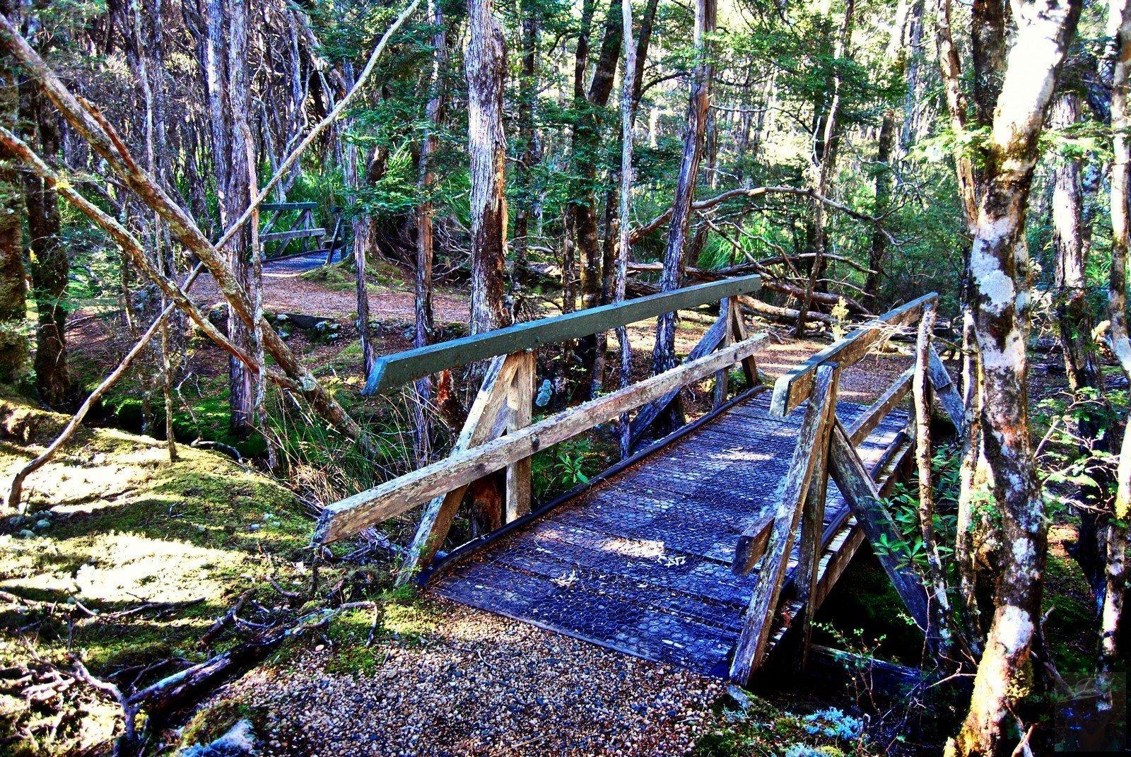 Goblin Forest Walk Blue Tier.017 11h15m30s2019 06 07 JPG