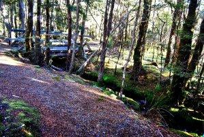 Goblin Forest Walk Blue Tier.019 11h16m32s2019 06 07 JPG