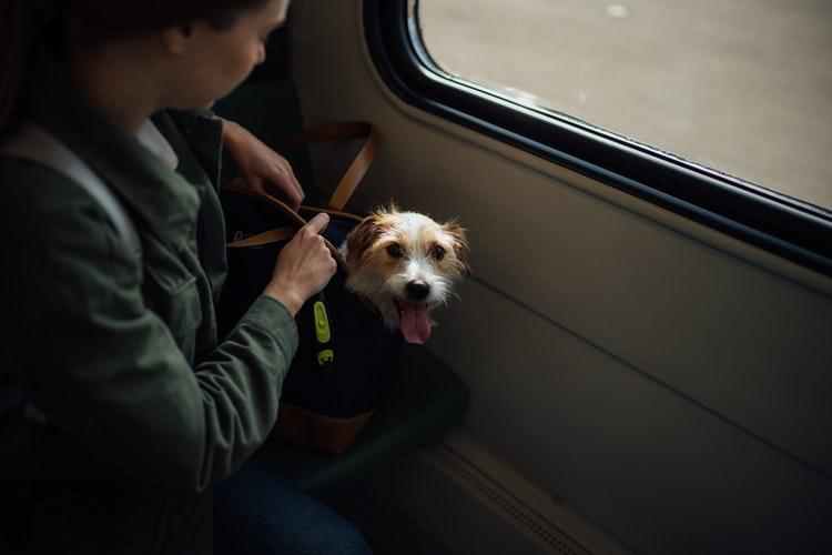 Pet Shipping by air is the preferred method