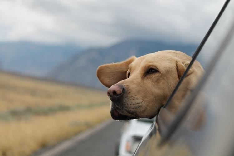 Pet Transport Costs and The Benefits Of Using A Pet Transporting Company