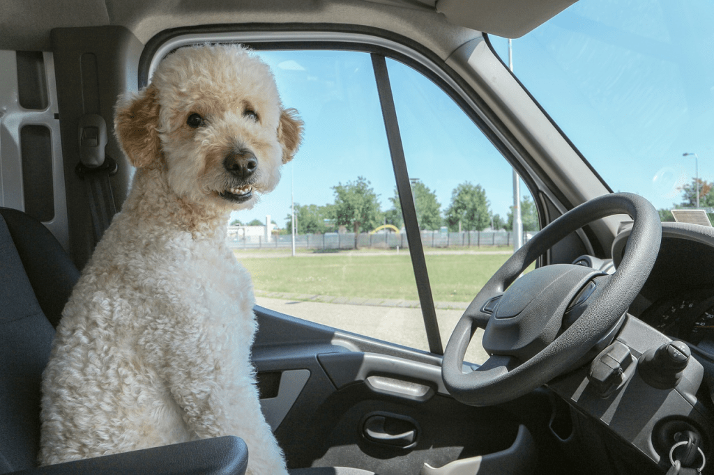 A dog in the driver's seat of a car.
