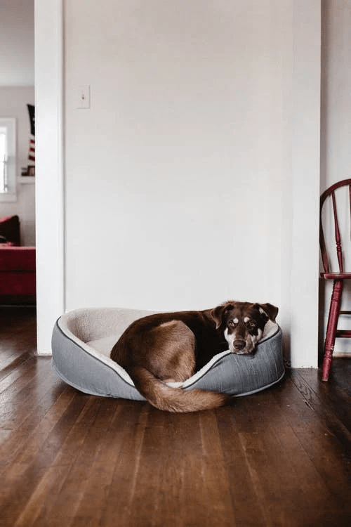 A dog lying in its bed.