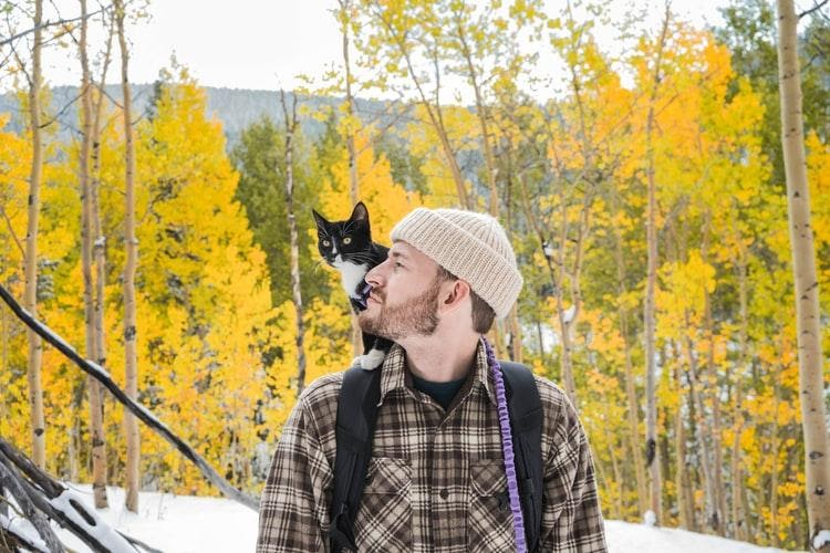 How To Travel With A Cat: What You Need to Know