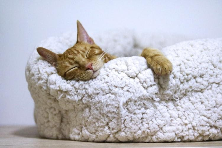 A cat bed is critical for travelling.