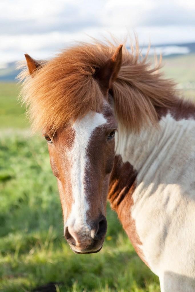 best horses for beginner