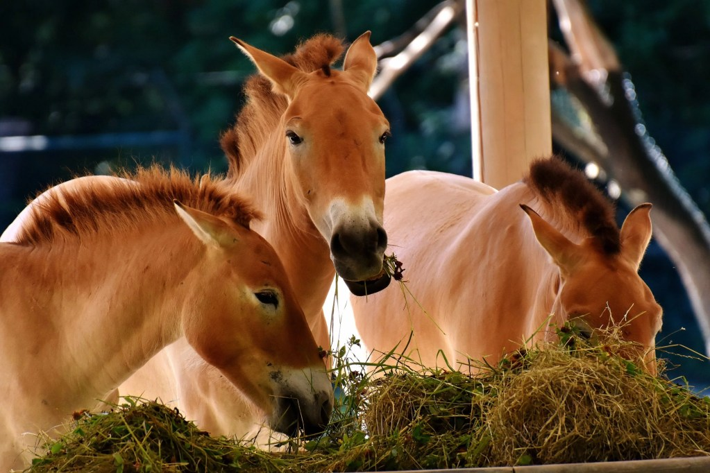 best feed for baby horse