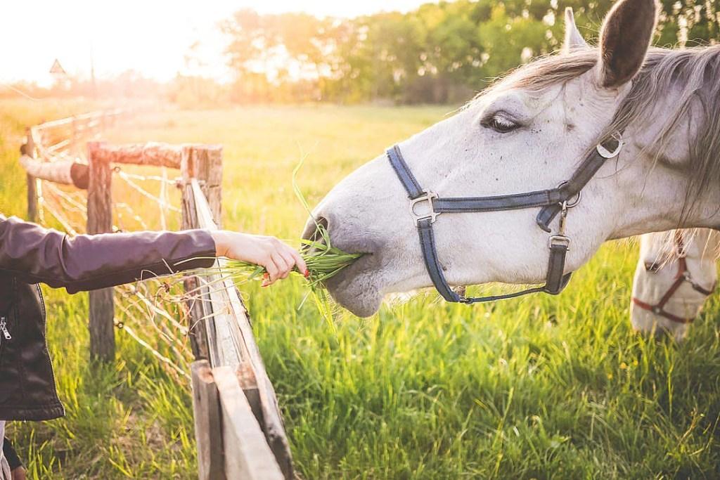 best horse feed brand
