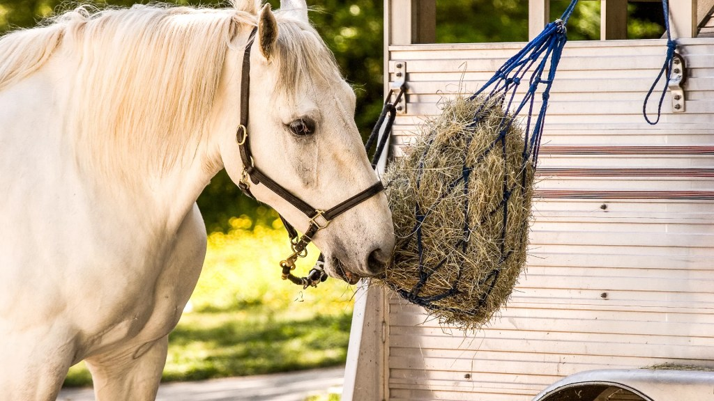 best slow feeder for horses