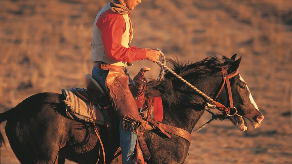 Best Horses For Trail Riding