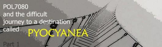 bridge Pyocyanea copy