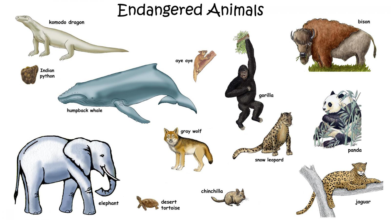 Picture Of Endangered Animals With Names For Kids
