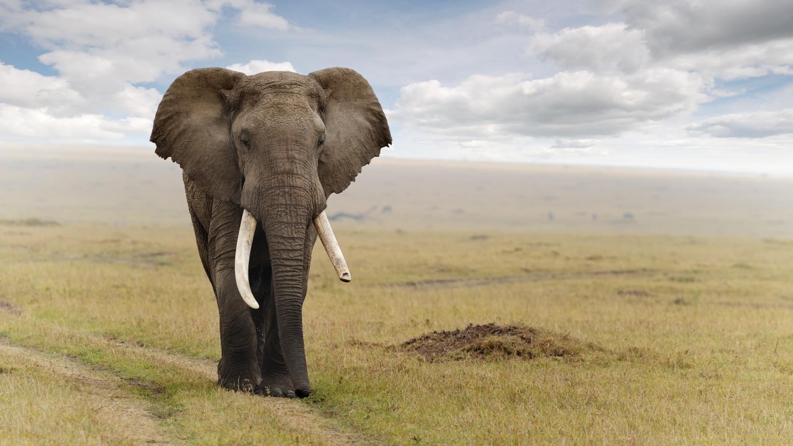 Big Cute Baby Wallpaper 20 High Resolution Elephant Pictures No 5 Big African