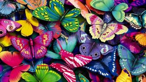 Attachment file to download for Cool wallpapers HD with colorful butterfly in cartoon